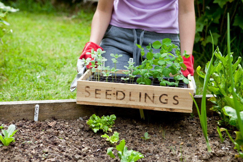 Top Tips On Creating Your Own Kitchen Garden